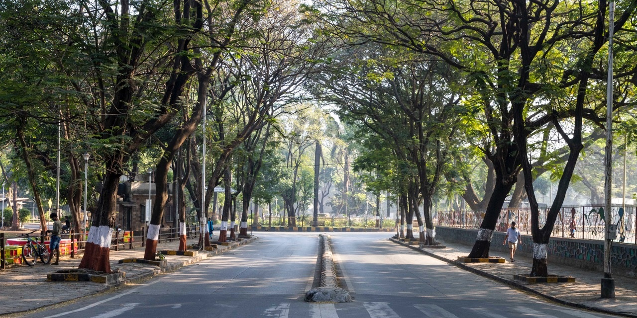 A tree-lined avenue in Mumbai's Dadar neighborhood. Photo by Aaran Patel